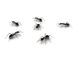 Ameisenbekämpfung Aschaffenburg