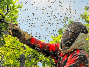 Wespenbekämpfung Bensheim